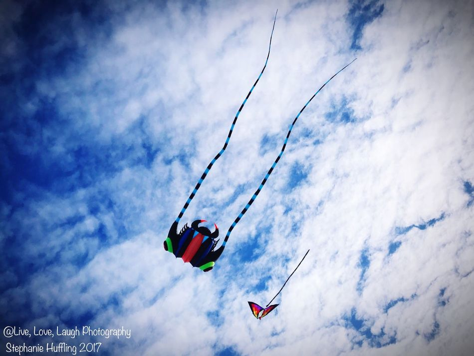 Low Angle View Sky Cloud - Sky Day Outdoors Nature Blue Flying Beauty In Nature No People Flying High Flying In The Sky Flying A Kite Soaring Windy Day