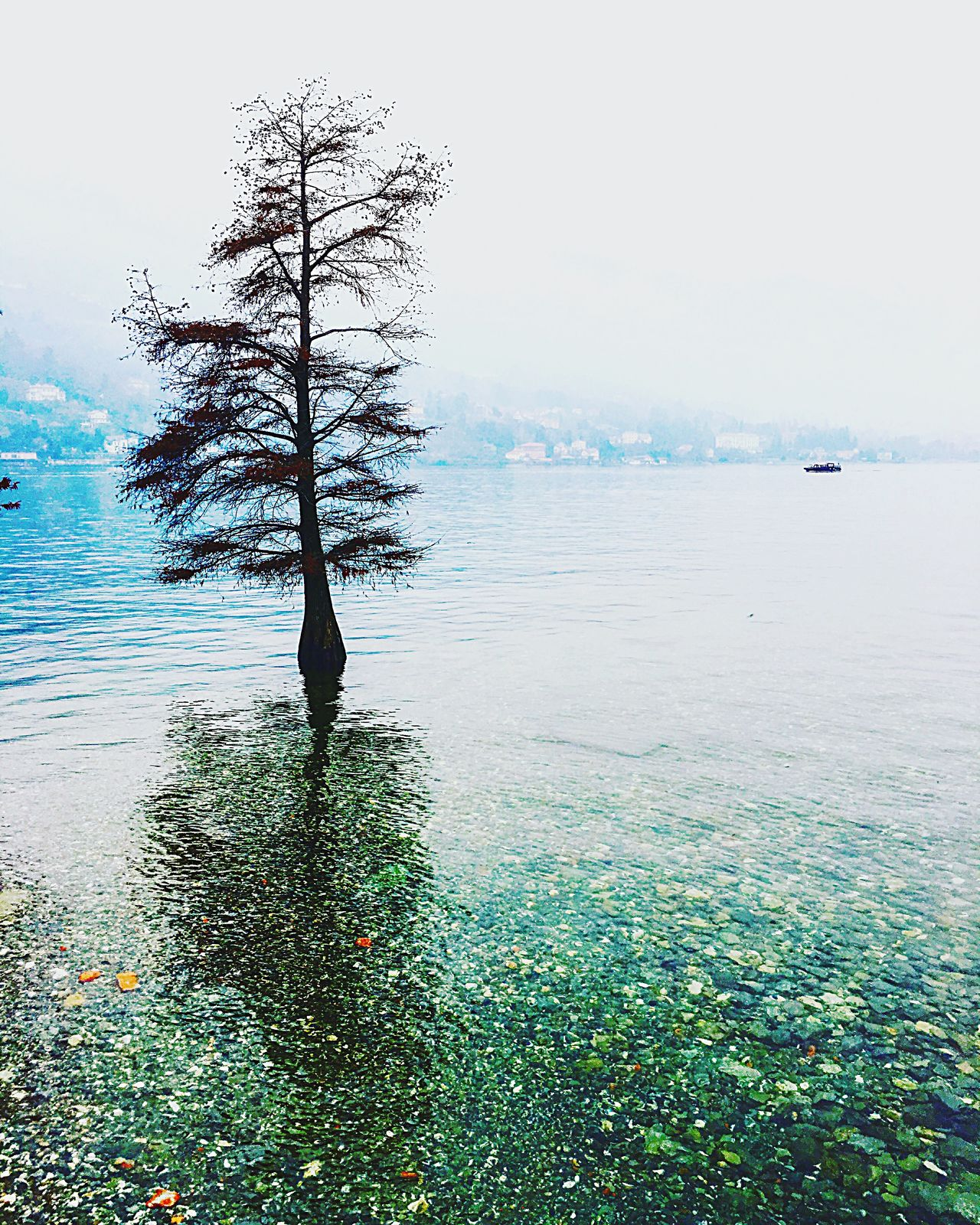 Nature Water Sea Beauty In Nature Tree Sky Tranquility Tranquil Scene Scenics Outdoors Day Growth Horizon Over Water No People