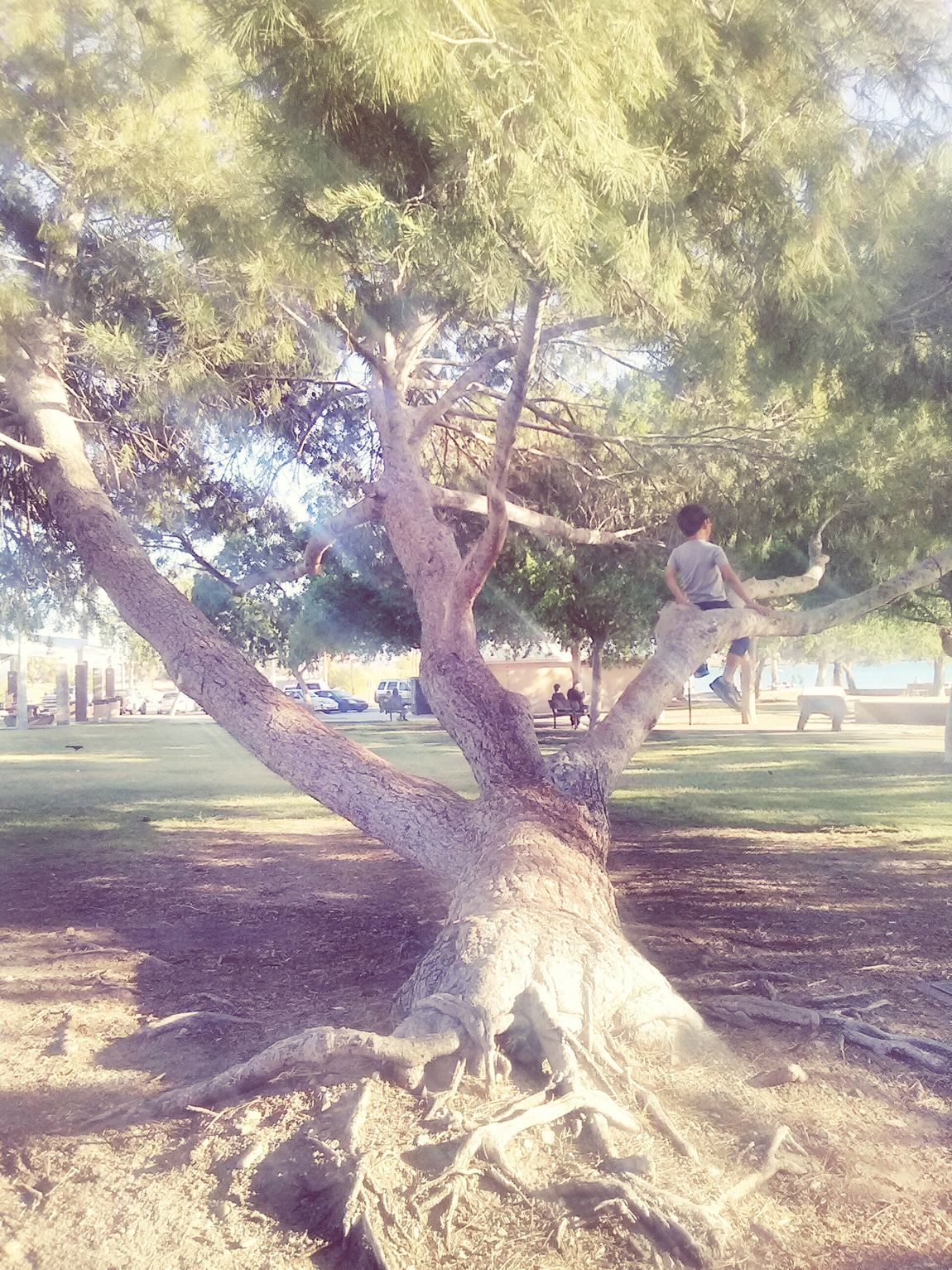 Taking Photos Boy In A Tree Outdoor Photography Simple Things In Life Feel Good Photography Lake Havasu City Showcase April The Essence Of Summer