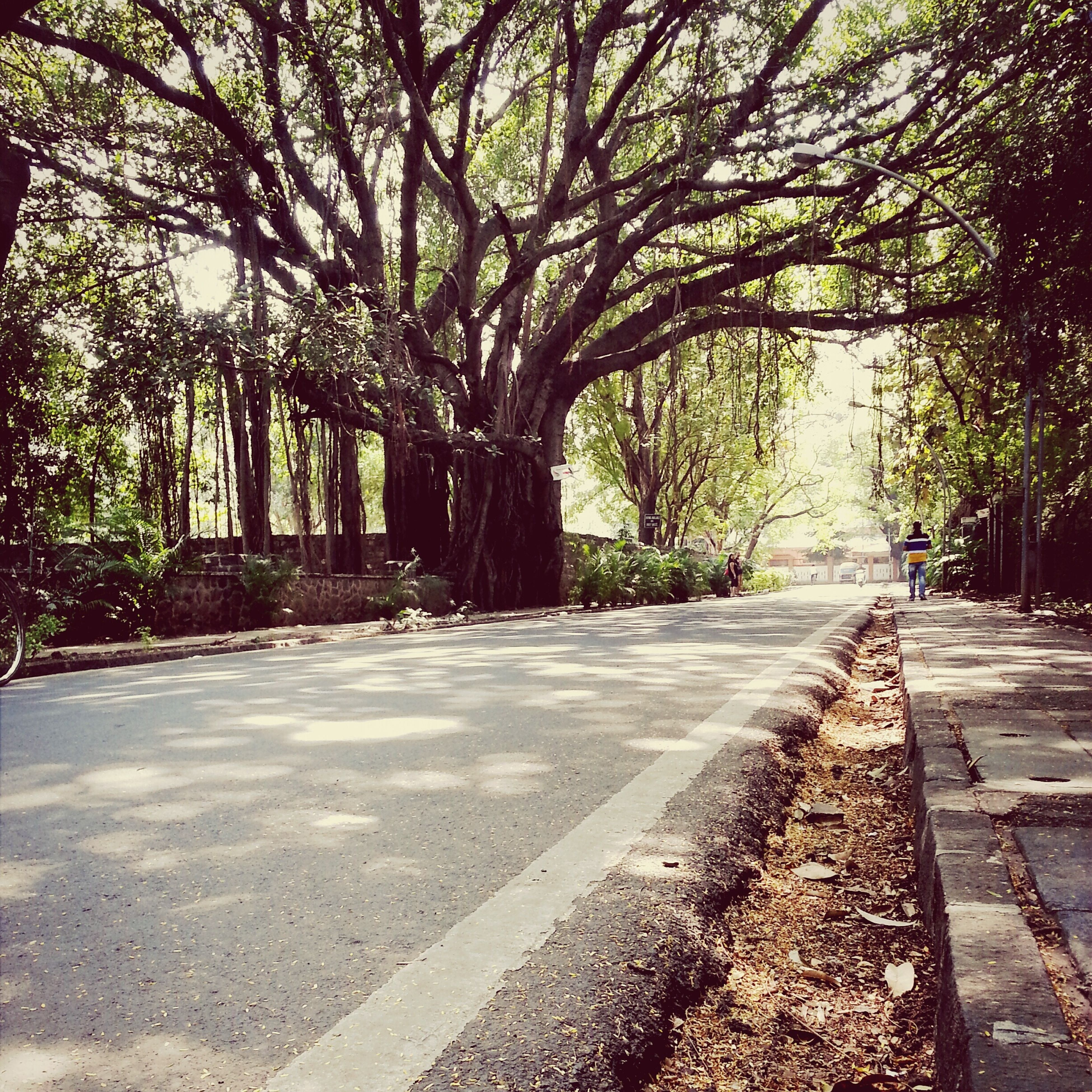 tree, the way forward, road, tree trunk, footpath, growth, tranquility, street, nature, transportation, branch, shadow, sunlight, park - man made space, tranquil scene, diminishing perspective, treelined, day, outdoors, empty road