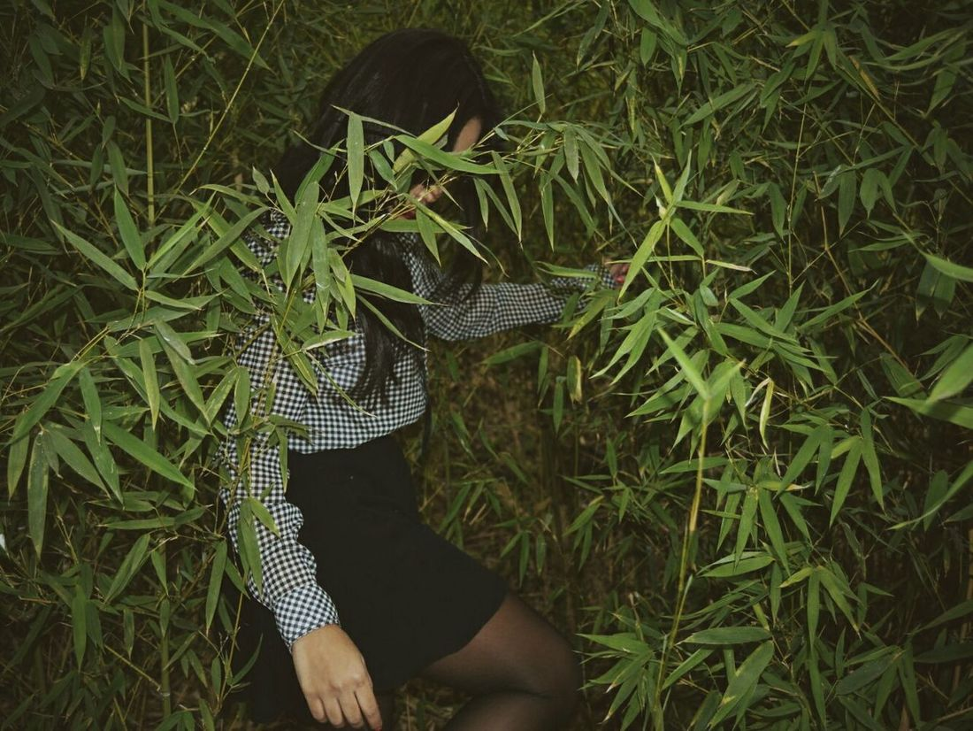 Green Nature Tranquility Plant Field Portrait Vintage Bamboo Darkness