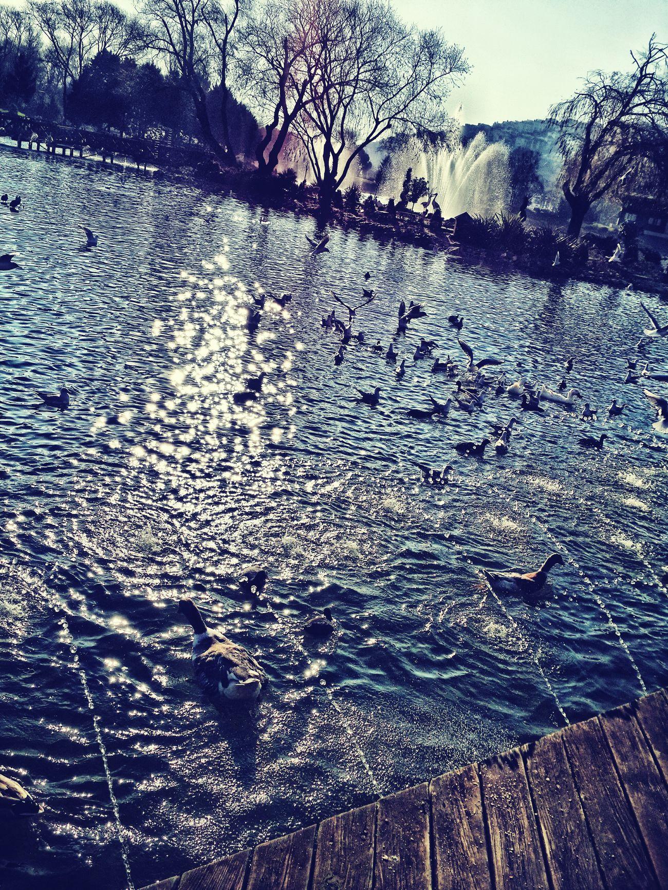 Good Morning Taking Photos Ducks Sunrise Hi! Walking Around Refresh Your Mınd..