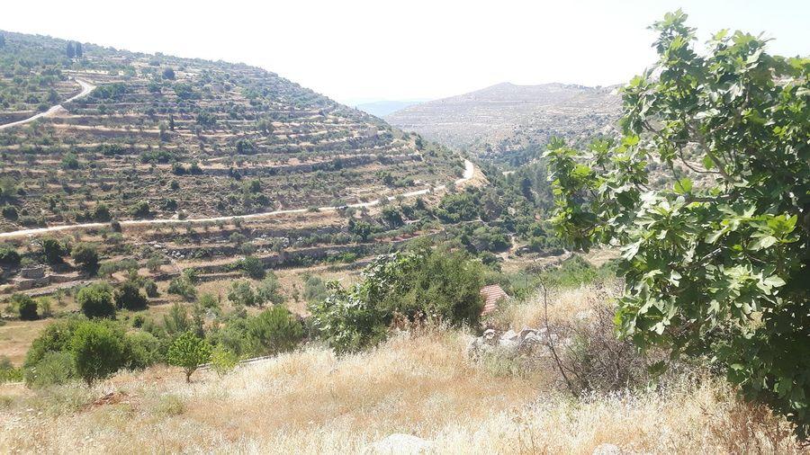 Beyt Jalla Beyt Jala Bayt Dschalla Lavender Field West Bank Lavender Color Machrout Valley Palestine Palestinian Taking A Stroll Hiking Valley Palestinian Territory Israel Machrour Valley Traveling Near East