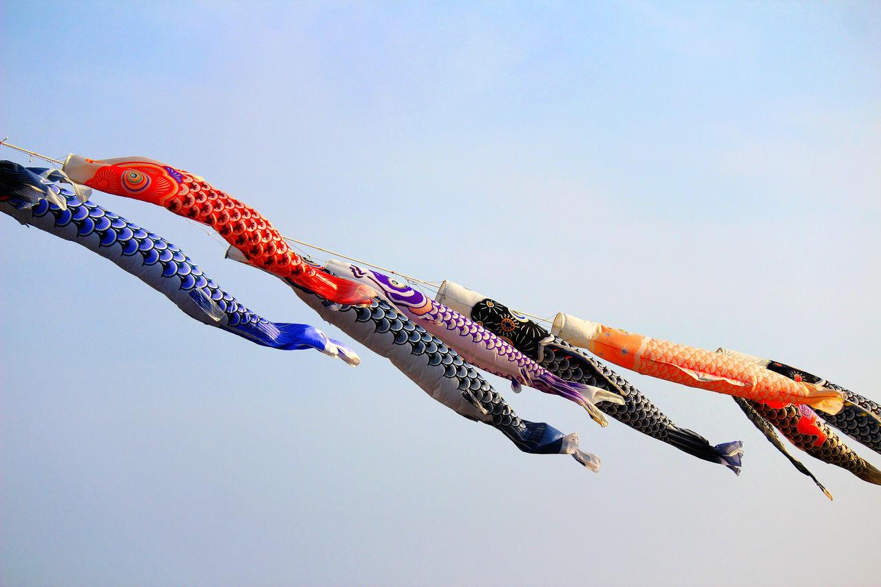 Blue Wave Carp Streamer EyeEm Gallery Feel The Wind Flap Koinobori Sky Collection Skyporn Tangonosekku
