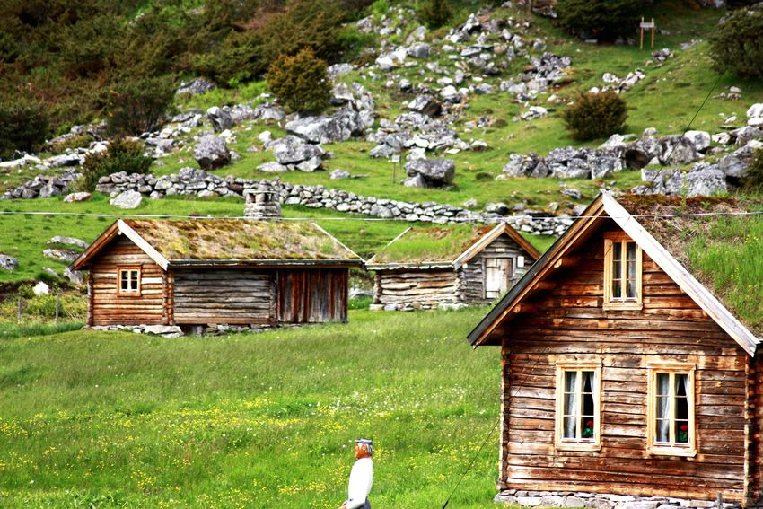 Amateurphotography Norway Architecture House Built Structure Tree Window Green Color Field Day Stones No People Grassy Multi Colored Beauty In Nature Idyllic Summer Sun Borlaug i Sogn