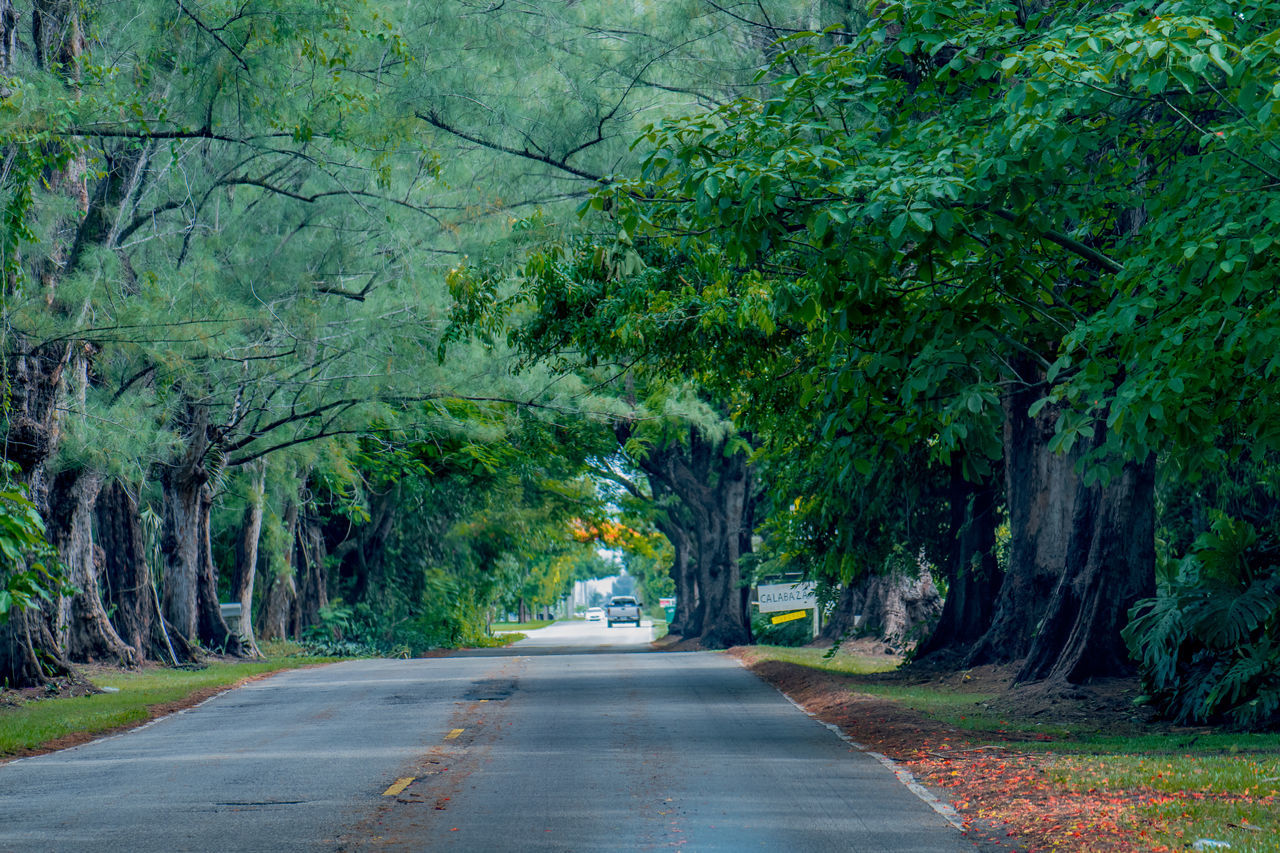 Amazing Beautiful Beauty In Nature Calm Colorful Landscape Landscape_Collection Landscape Photography Leaves Nature Nature Photography Nature Collection Naturelovers Path Perfection Road Roadtrip Scenics Serenity Tranquility Tree Tree_collection  Trees Bestoftheday Let's Go. Together.