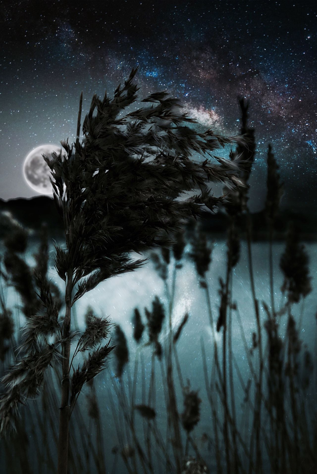 Without the dark, we would not see the stars ✨ Star - Space Sky Nature Beauty In Nature Tree Night Astronomy Milky Way No People Galaxy Winter Snow Scenics Star Field Space Outdoors Close-up EyeEm Best Shots EyeEm Nature Lover EyeEm Best Edits EyeEmNewHere EyeEmNewHere