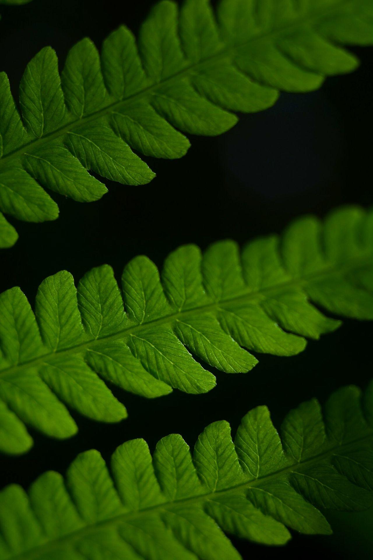 папоротник макро Macro Leaf First Eyeem Photo