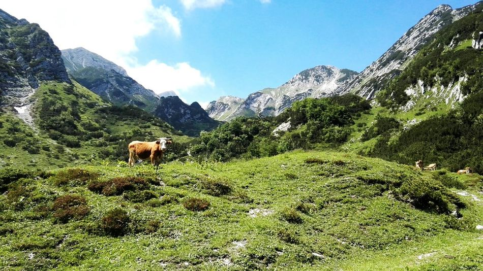Slovenian mountains ⛰ Slovenia Landscape Slovenia Scapes Slovenian Alps Mountains View Hiking Hikingadventures Cow Field Nature Nature_collection Nature Photography Beauty In Nature Beautiful View Traveling Travel Destinations Travel Photography Green Color Cloud Mountain Range High Angle View Wilderness Mountain Valley