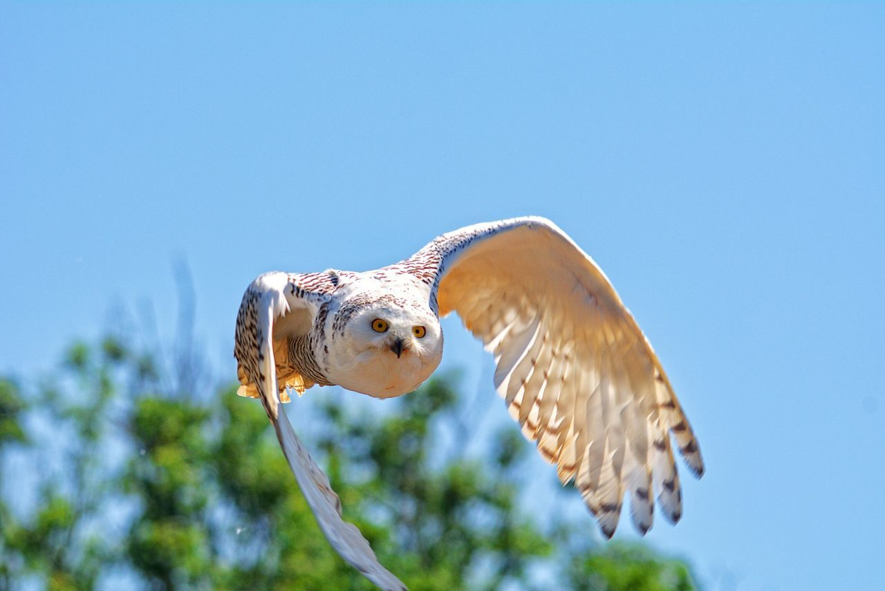 Beautiful stock photos of eule, one animal, bird, animals in the wild, animal themes