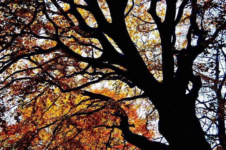 Fall Beauty Fall Tree Photography Autumn🍁🍁🍁