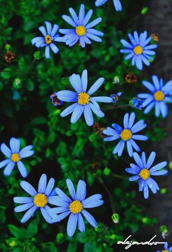 Les étoiles. Etoiles Fleur Fleurs Flor Flores Flower Flowers Nature