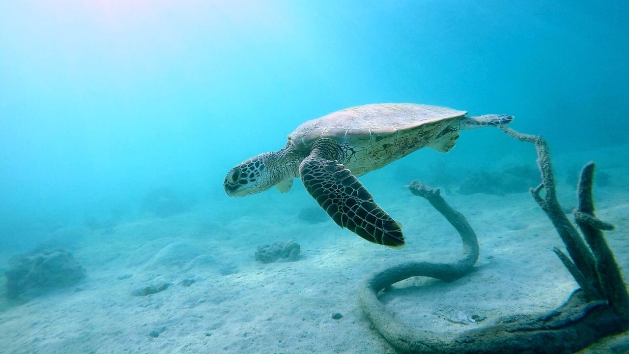 Reptile Turtle Sea Turtle Underwater Animals In The Wild Animal Wildlife UnderSea Animal Themes One Animal Swimming Sea Life Sea Tortoise Water No People Nature Day Tortoise Shell Outdoors Close-up