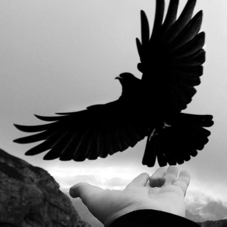 Fine Art Photography Adventure Club Sswitzerland Nature Bird Hand Black And White Mobile Photography IPhoneography Check This Out Taking Photos Travel Adventure Mydswissmoments A Bird's Eye View Dramatic Angles Monochrome Photography