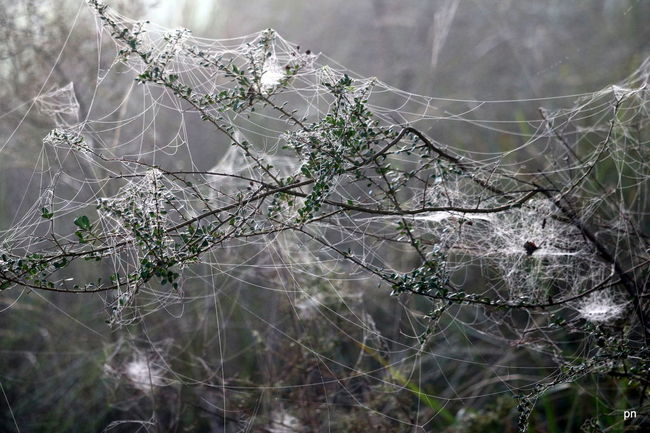 What a tangled web we weave..... Beauty In Nature Close-up Day Focus On Foreground Fog Fragility Idyllic Landscape Natural Pattern Nature No People Non-urban Scene Outdoors Plant Scenics Selective Focus Spiderweb Tangle Tranquil Scene Tranquility Twig Weather Web