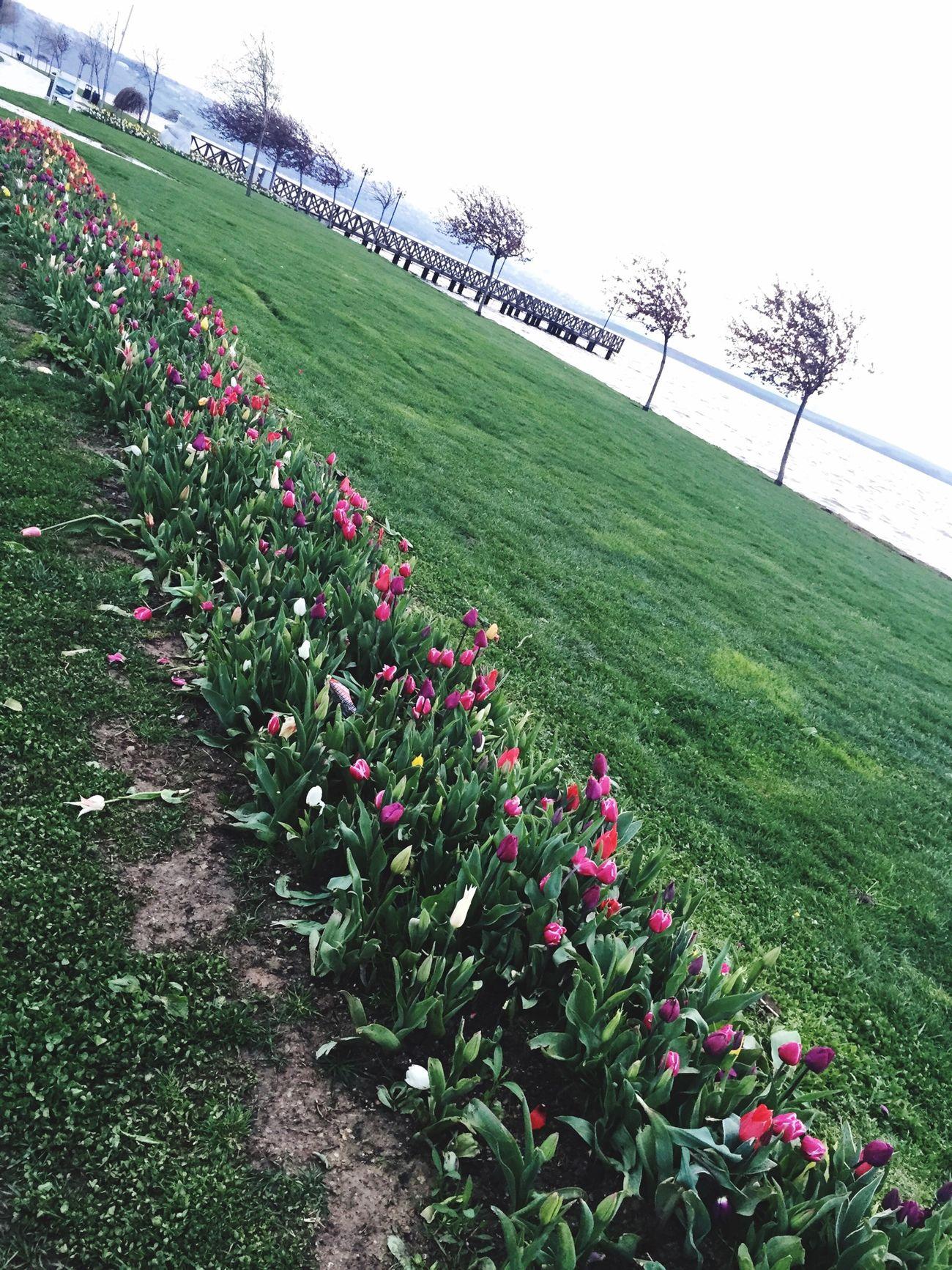Flowers Flower Lale Istanbul Küçükçekmece Hayatsokaklarda