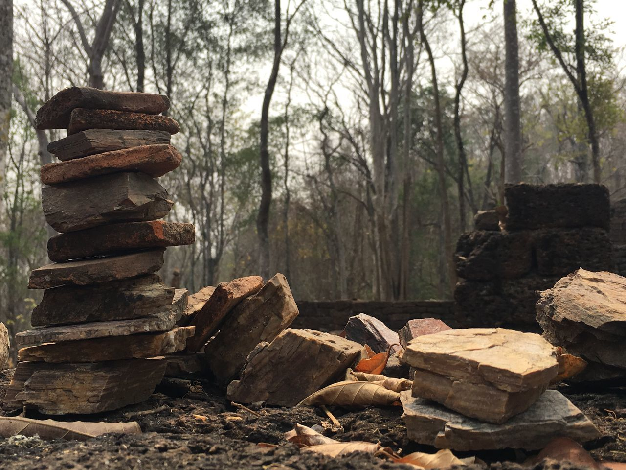 Stack Tree Wood - Material Large Group Of Objects Log Nature No People Lumber Industry Woodpile Forest Pile Deforestation Timber Outdoors Day Close-up Rock Close Up Zen