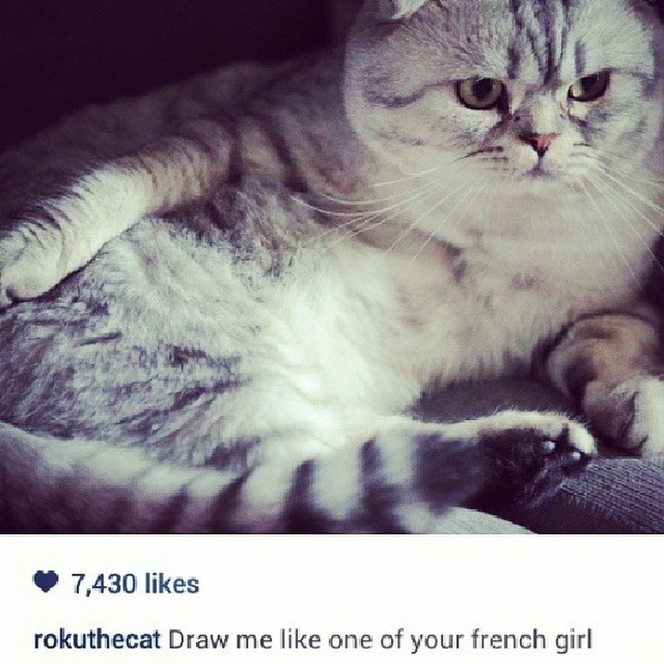 This is so funnny. Omg ???? Rokuthecat