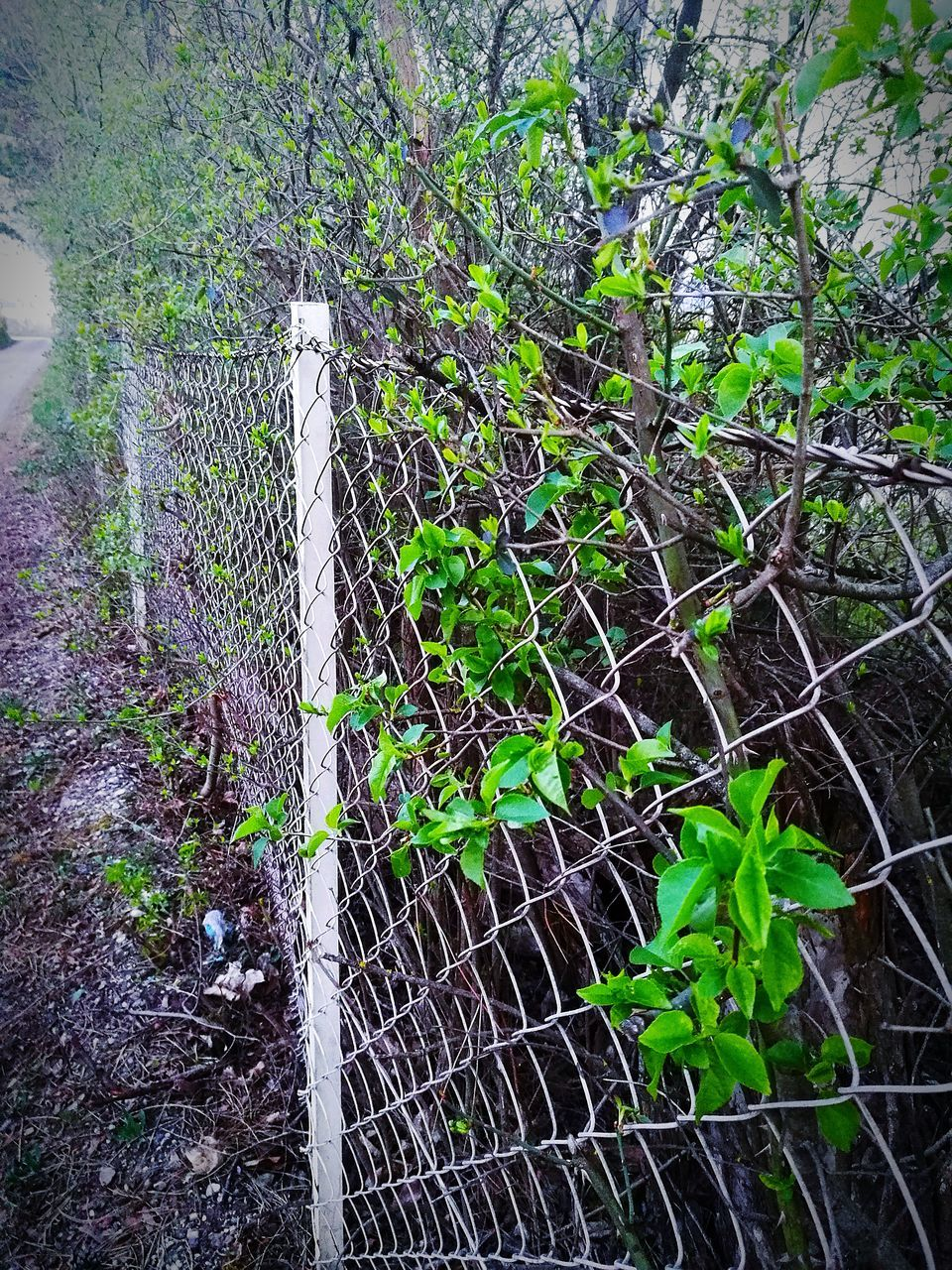 growth, plant, leaf, no people, day, protection, nature, outdoors, green color, ivy, fragility, tree, close-up, beauty in nature