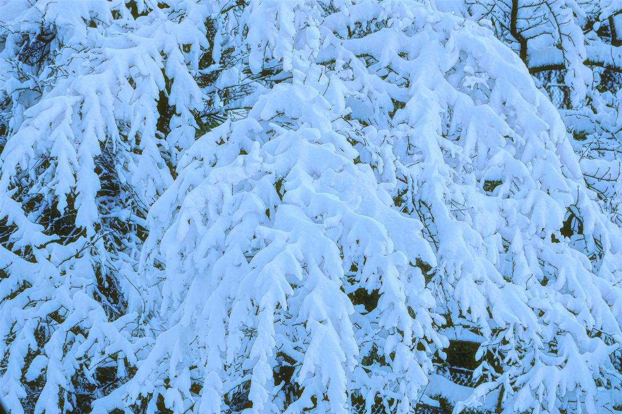 Autumn Snow Beauty In Nature Branch Cold Temperature Day Outdoors Snow Weather White Color Winter