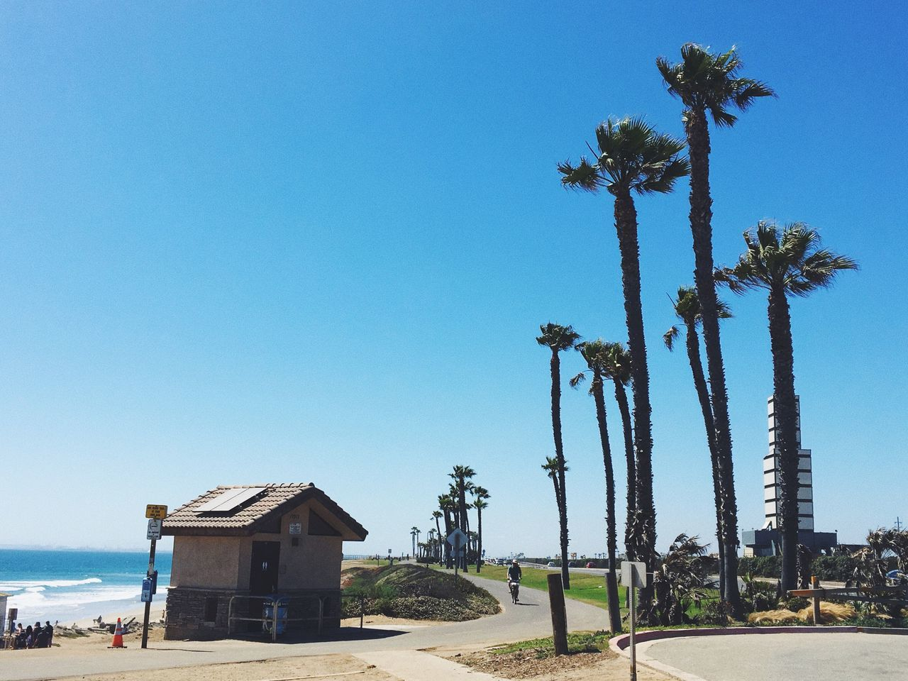 Clear Sky Palm Tree Day Blue Tree Outdoors Beach Nature Sky IPhoneography Vscocam The Great Outdoors - 2017 EyeEm Awards
