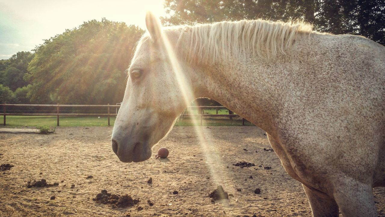 Side View Of Horse Standing On Field In Sunny Day