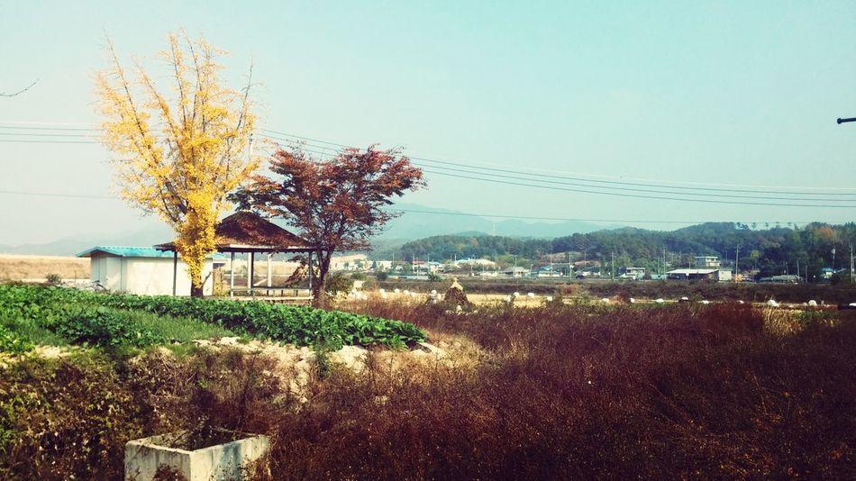 Fall. South Korea