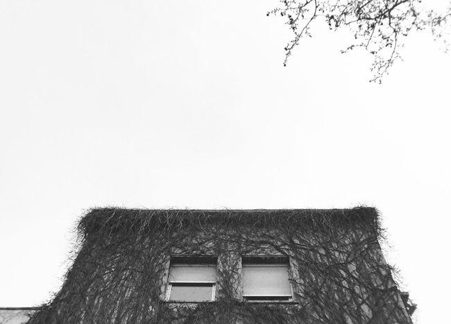 La casa peluda (Hairy house) The Architect - 2016 EyeEm Awards Vscocam Hairy  House Hair Casa Peluda Pelo
