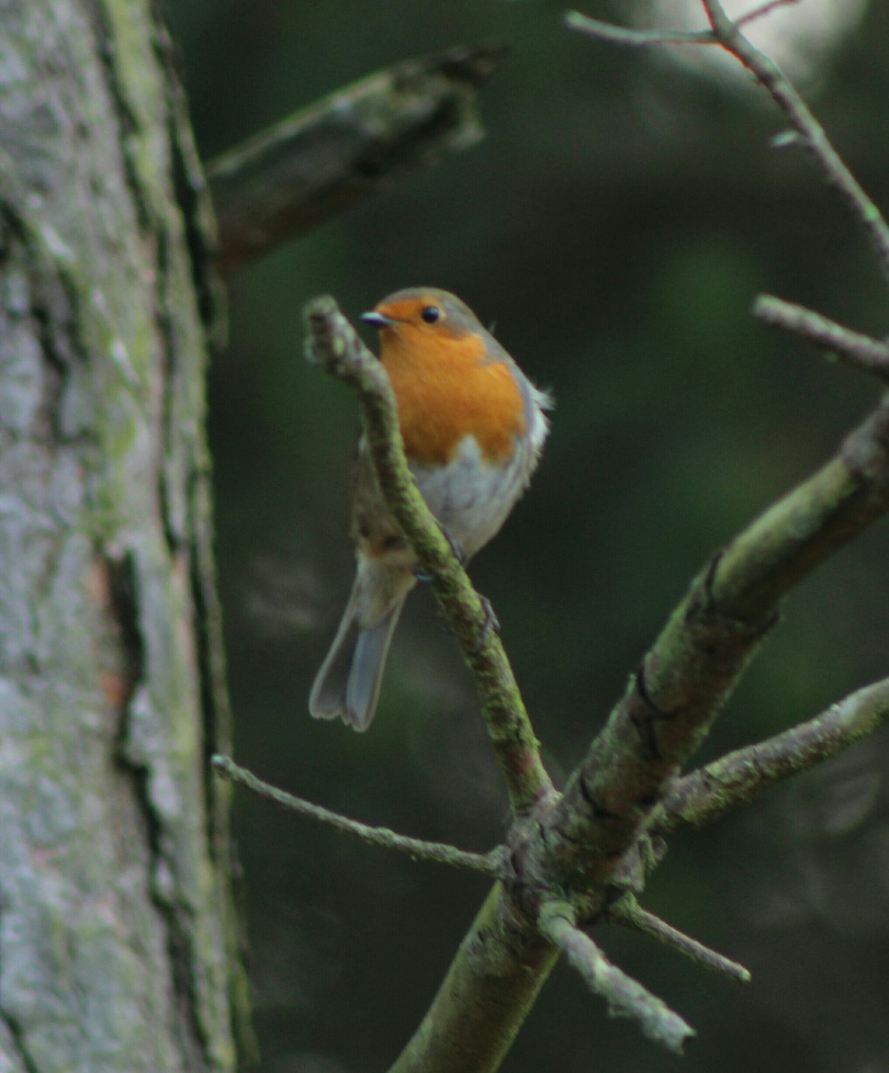 Robin Nature Derwent Reservoir Birdwatching Birds Birds_collection Bird Photography