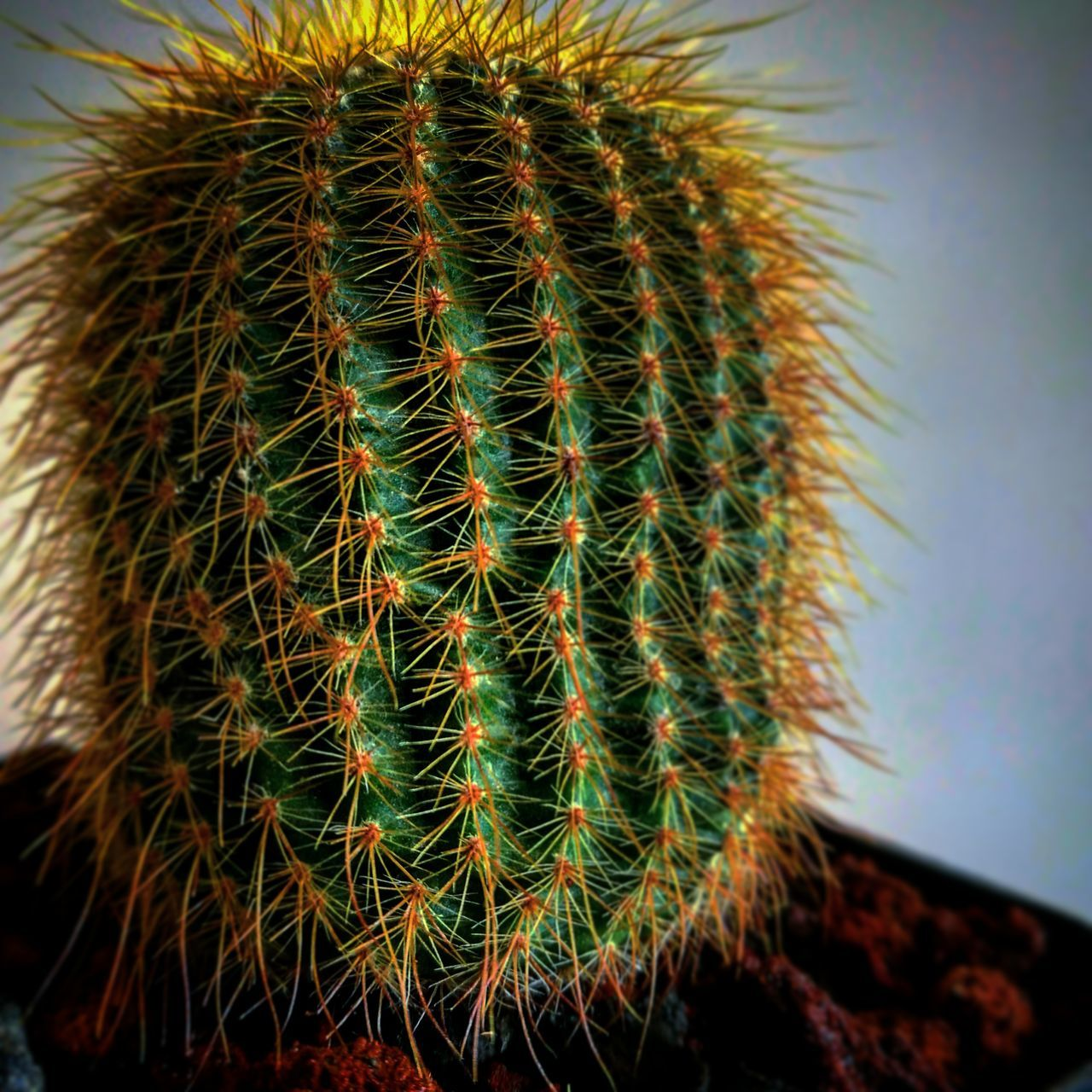 cactus, thorn, growth, spiked, barrel cactus, focus on foreground, plant, nature, green color, close-up, danger, no people, risk, beauty in nature, outdoors, day, saguaro cactus, sky