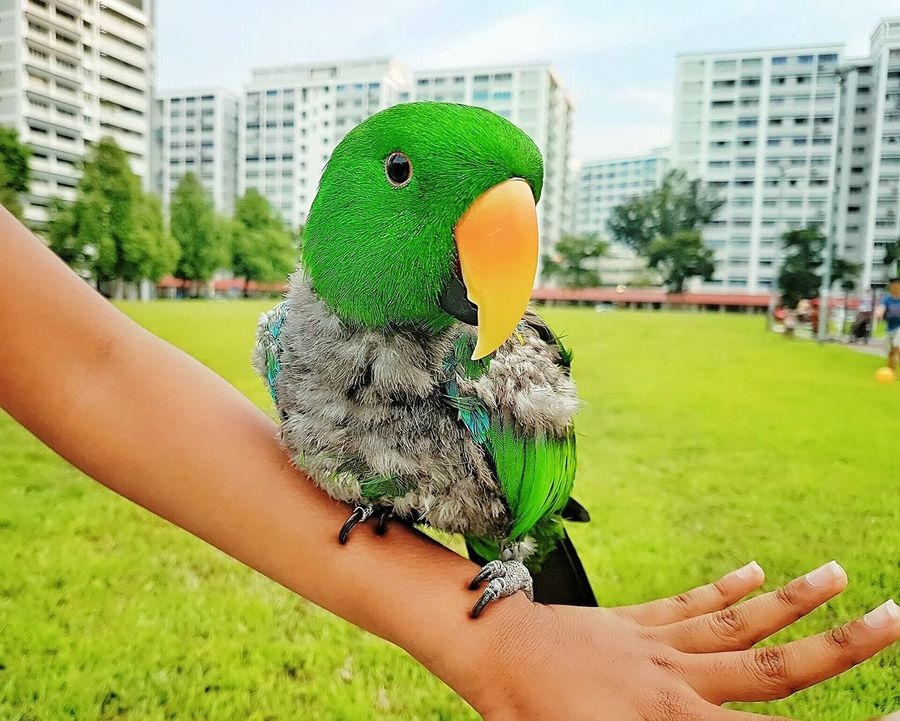 Green Color Close-up Human Arm Parrot Lover Parrots Of Eyeem Parrotsofinstagram Parrot❤ Parrotlove Birds🐦⛅ Birdfreaks Birdsofinstagram Birdphotography Samsung Galaxy S7 Edge Phonegraphy