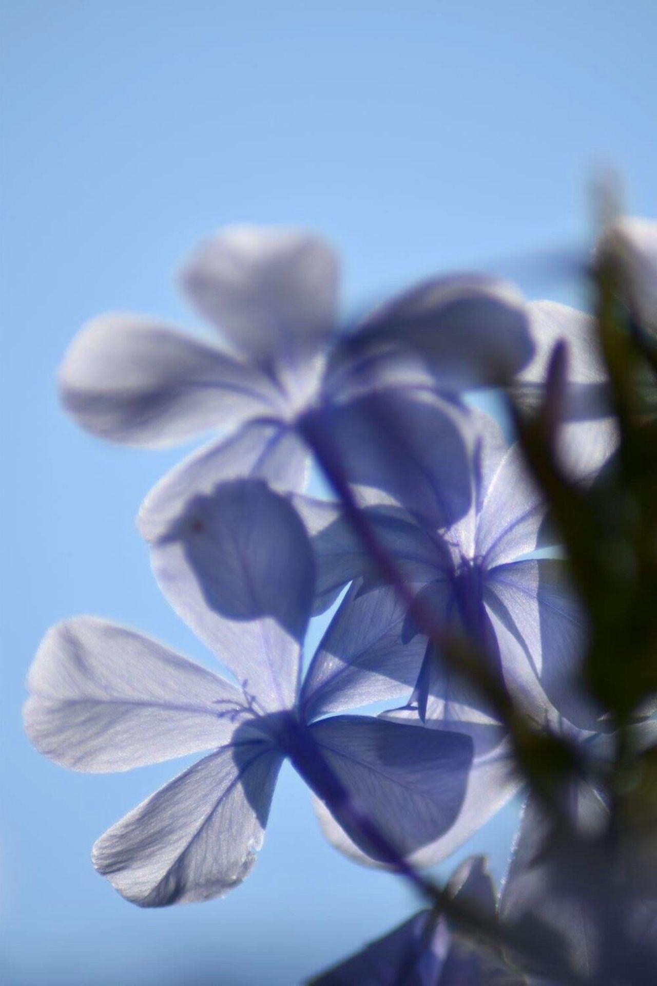 Beautifully Organized Blue Flowers