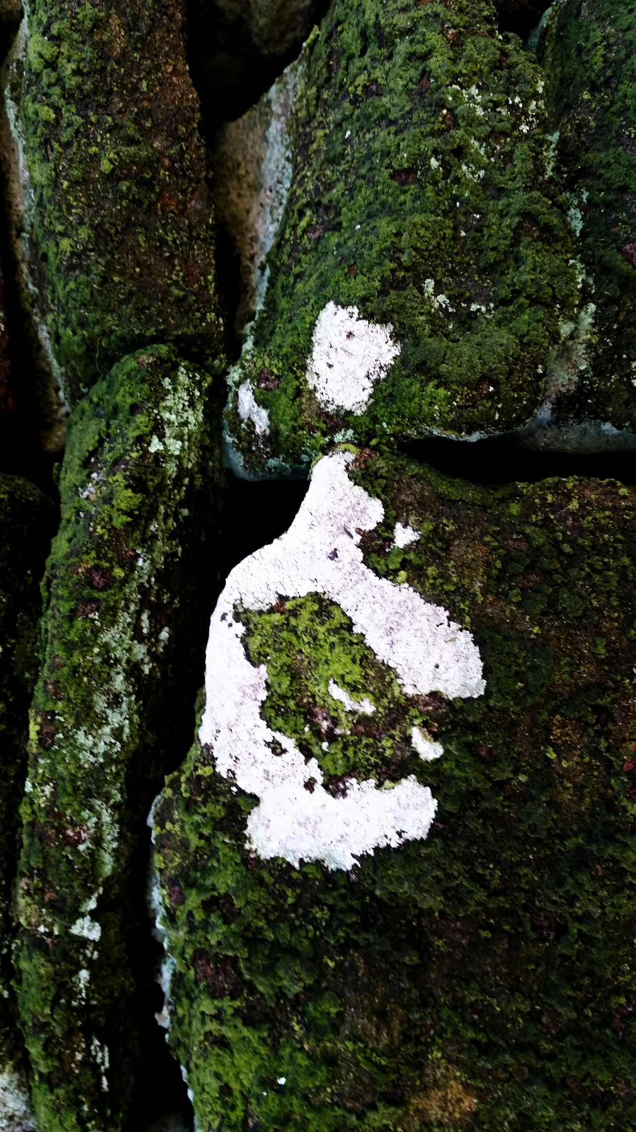 Outdoors Eyem Nature Lovers  Eyemphotography Eyem Gallery Green Color Gritstone Lychen Moss & Lichen Moss Close Up Moss-covered Mossy Stone