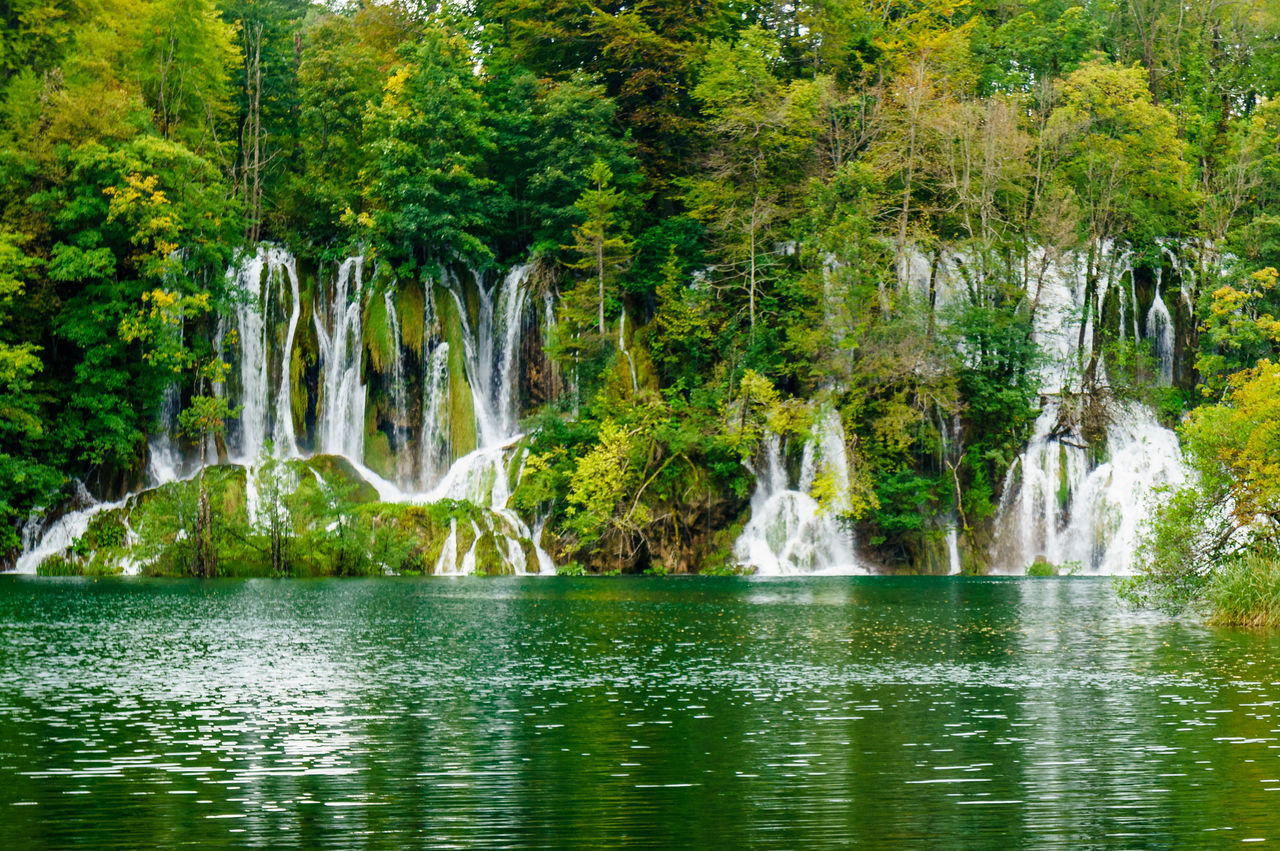 Beauty Beauty In Nature Day Freshness Green Color Landscape Mammal Nature No People Outdoors River Scenics Travel Destinations Tree Water Waterfall