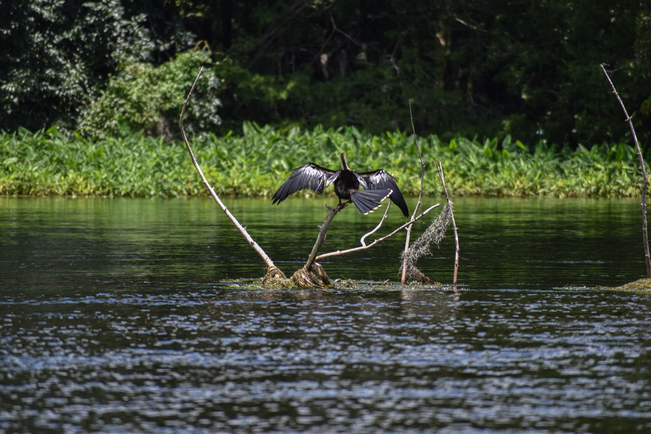 water, animal themes, lake, one animal, nature, animals in the wild, waterfront, mammal, tree, animal wildlife, day, outdoors, no people, reflection, bird, domestic animals, beauty in nature, grass