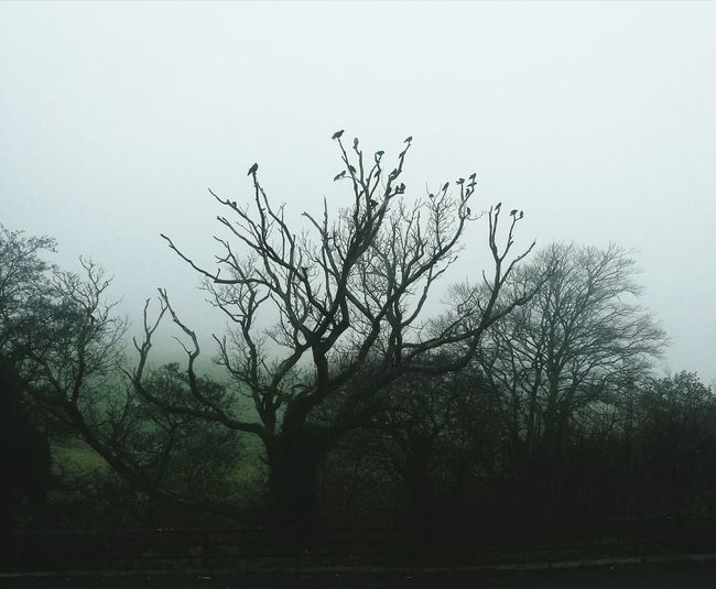 Tree Nature No People Outdoors Sky Day Foggy Morning Ireland