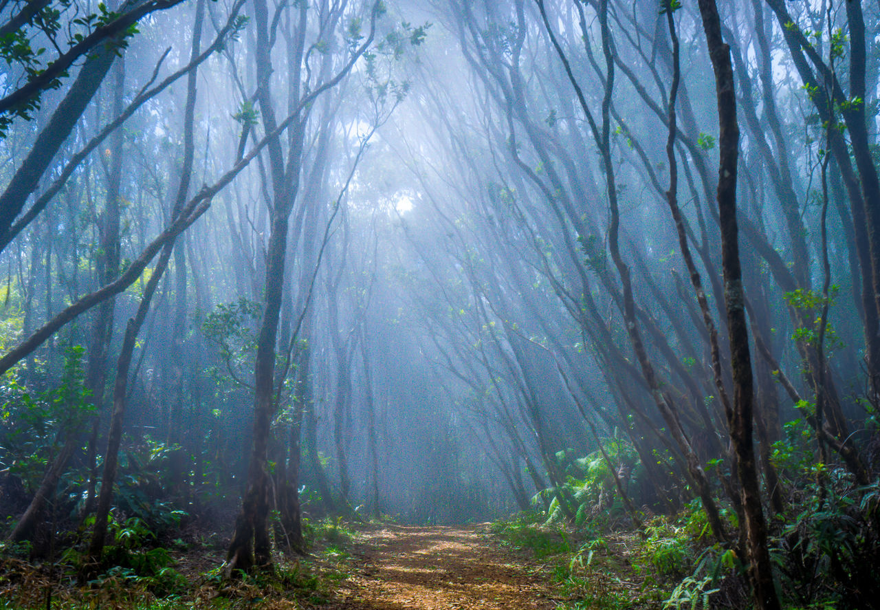 Beauty In Nature Day Fog Forest Freshness Growth Landscape Nature No People Outdoors Scenics Sky Tranquility Tree