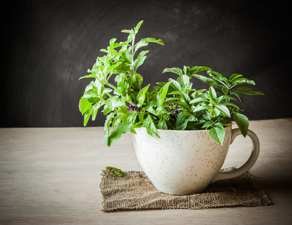 Background Basil Ceramic Close-up Concept Conceptual Cup Food Food Stylist Freshness Green Color Growth Healthy Eating Herb Idea Indoors  Leaf Leaf 🍂 Nature No People Plant Raw Food Studio Shot Vegetable Wood - Material