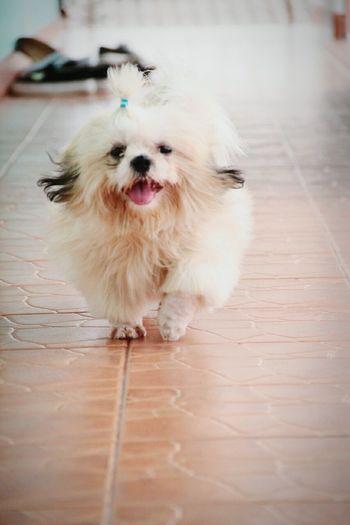 She smile Dog San-D