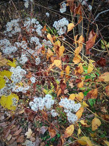 Smallwonder FallFlowers Autumn Outisde