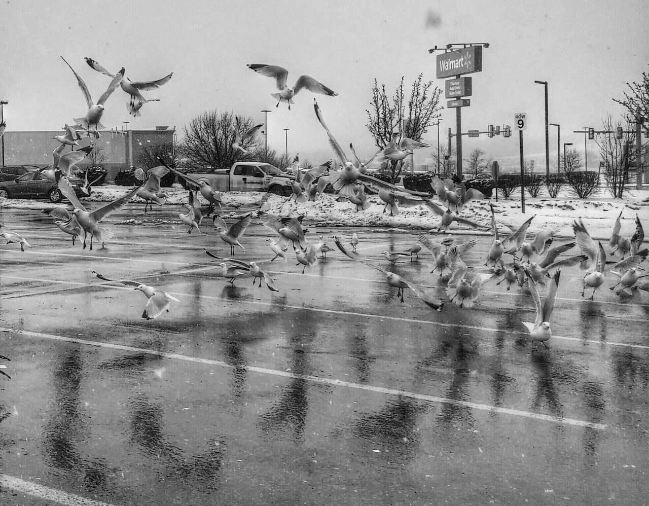 Seagulls Blackandwhite Birds In Flight Taking Photos Photography The Action Photographer - 2015 EyeEm Awards Action Shot  birds of a feather stick together living the dream Jft