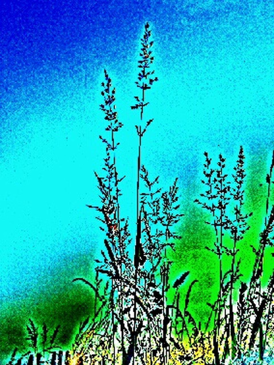 blue, day, no people, outdoors, green color, plant, nature, beauty in nature, water, tree, close-up, sky, freshness