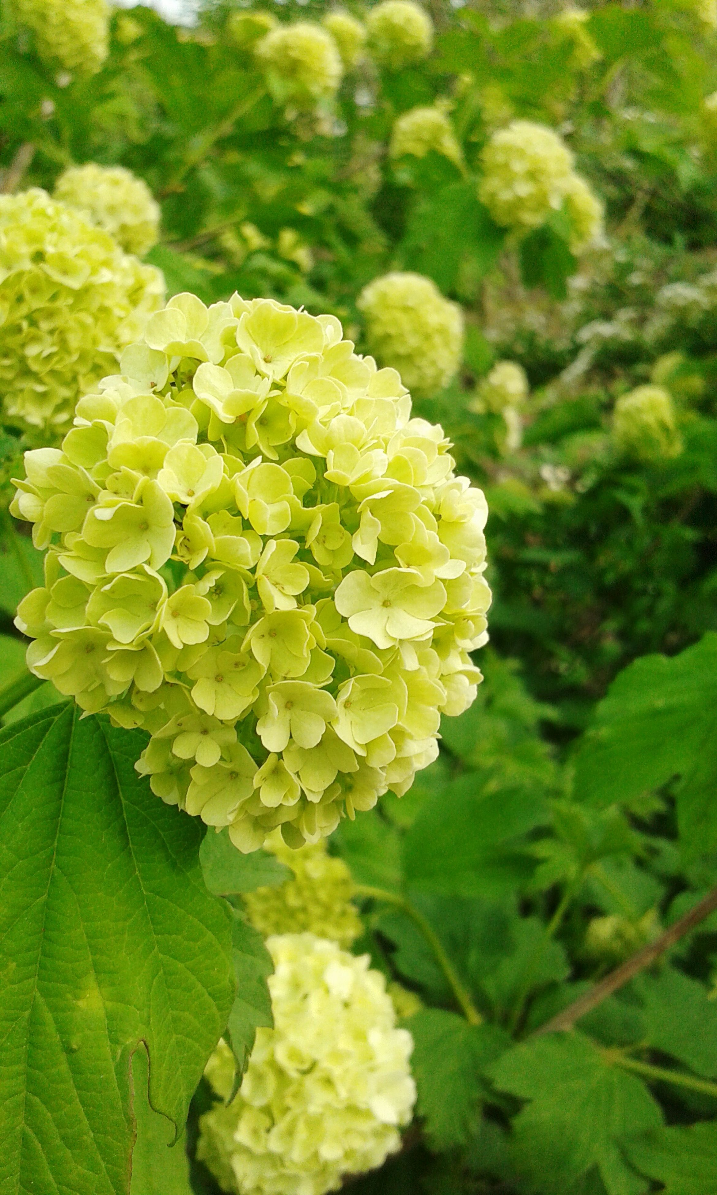 flower, freshness, growth, fragility, beauty in nature, petal, green color, nature, plant, flower head, leaf, close-up, blooming, yellow, focus on foreground, in bloom, blossom, day, high angle view, outdoors