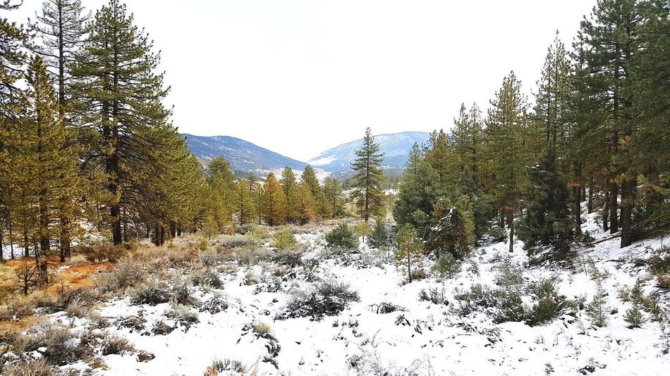 Landscape Nature Outdoors Beauty In Nature Snow ❄ Winter Pine Mountain! Southern California