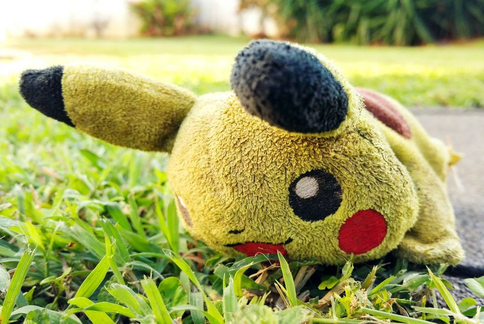 Focus On Foreground Grass Pet Toys Caribbean Life Puerto Rico Relaxing Outdoors Domestic Animals Pets While It Last Pikachu