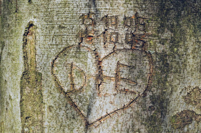Forever LOVE Carved Tree Carved In Wood Love Forever Love Written Written In WoodWood Pattern Pattern Pieces Forest Forestwalk Walking Around Taking Photos Getting Inspired Enjoying Life EyeEm Gallery Eye4photography  EyeEm Best Shots TheWeekOnEyeEM Simplicity Detail Deceptively Simple From My Point Of View Growth