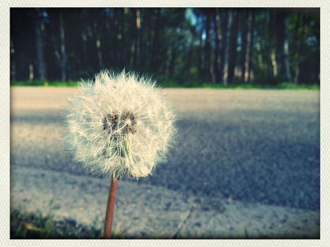 Time passing Walking Walking Alone... Miracles Of Creation