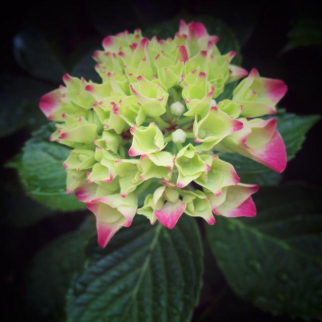 In My Garden Dutch Garden Nature Photography Nature_collection Flowers,Plants & Garden