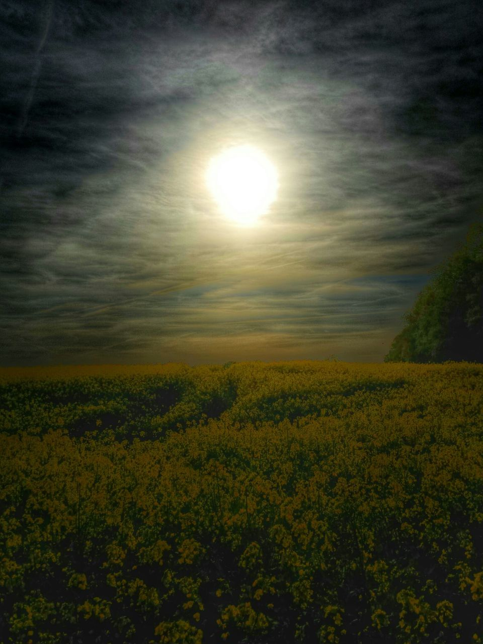 Scenic View Of Yellow Flowers Blooming On Field Against Sky