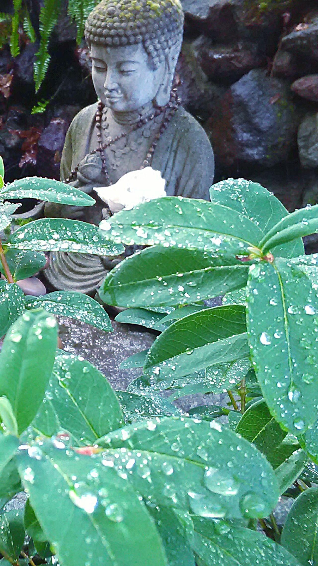 EyeEm Nature Lover Water Drops Garden Photography Rainy Days☔ My Photography My Point Of View Zen Garden Rain Drops Plants 🌱 Rocks And Water Leaves🌿 Rain Drops On Leaves Plant Photography Meditation Garden Garden Statue